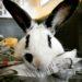 Eleanor Roosevelt the Bunny