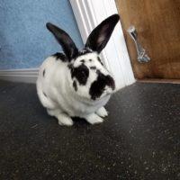 Ralph Waldo Emerson the Bunny