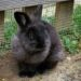 Huckleberry the Bunny
