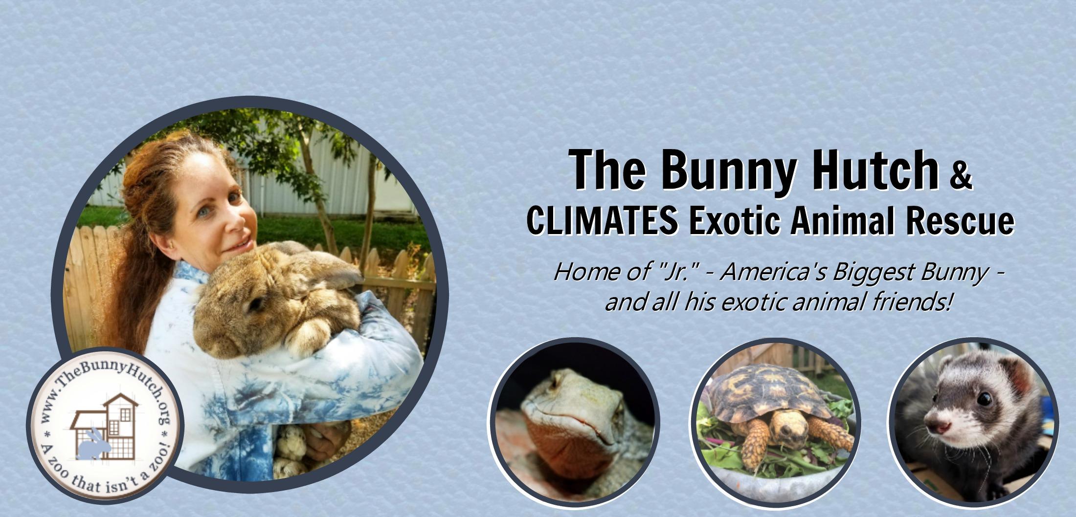 The Bunny Hutch – Virginia Beach Exotic Animal Rescue