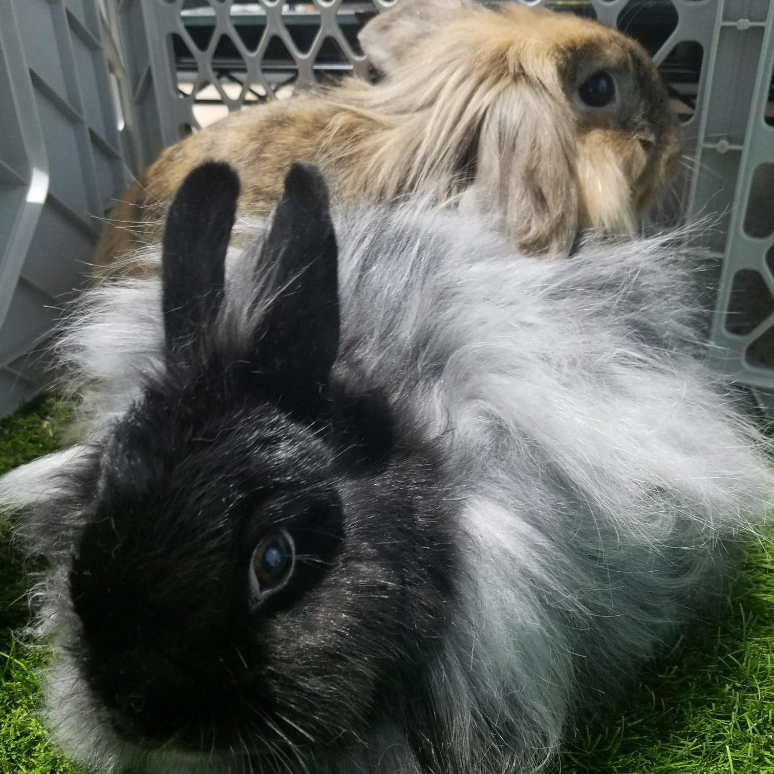 Dahlia and Gizmo the Bunnies