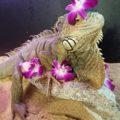 Tony the Green Iguana