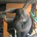 Ashley the Bunny