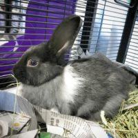 Oreo the Bunny